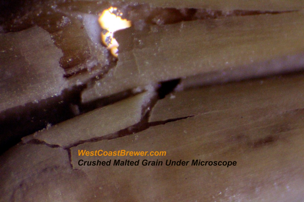 Crushed Malted Barley - Malt - Shown under magnification